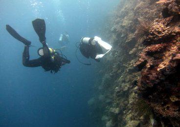 Scuba Diving Image